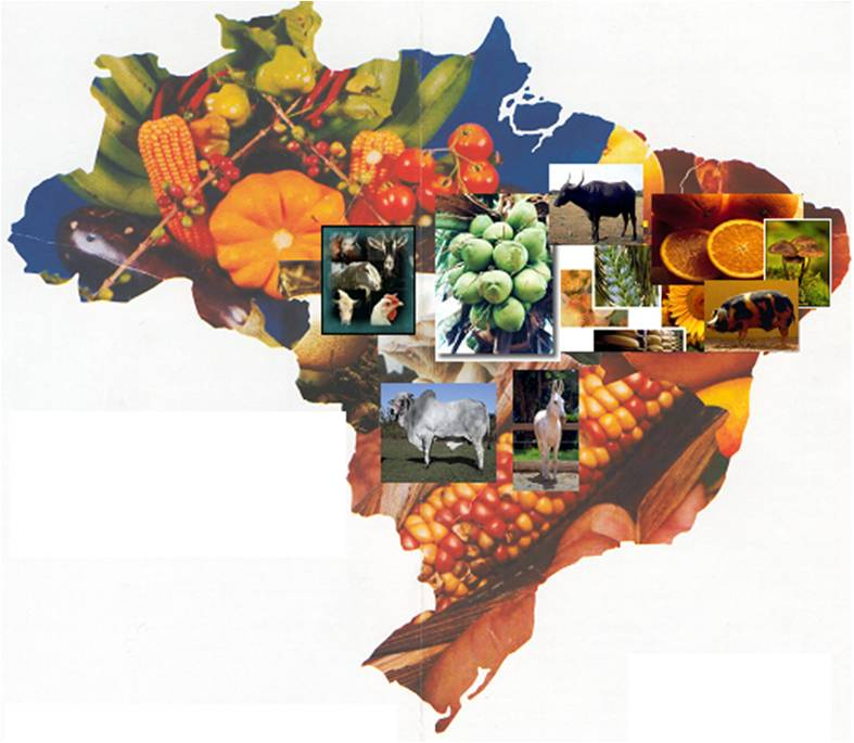 Agriculture Food And Natural Resources Activities