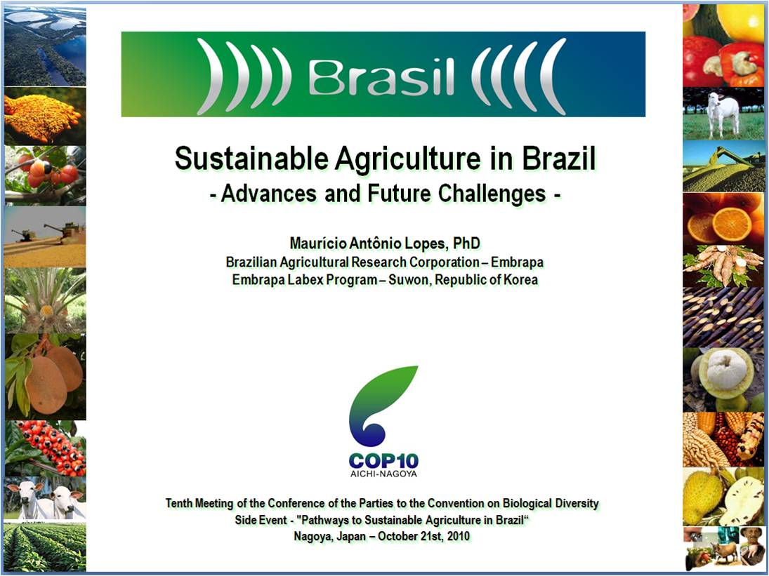 brazils development essay Brazil's development essay 1192 words | 5 pages in 1960 to 1166 in 2010 this decline can be attributed to the population adapting to the urban economic trends brazil's economy has shown many changes in trends over the past years in various economic areas.