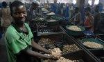 cashew nut factory mozambique